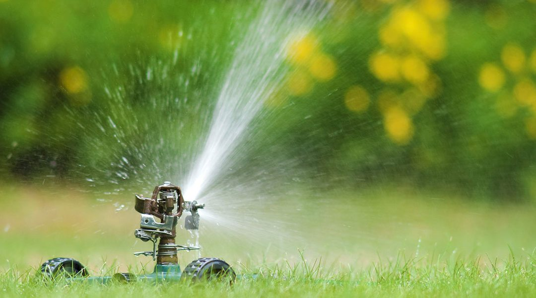 watering your lawn long term