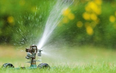 Long Term Watering