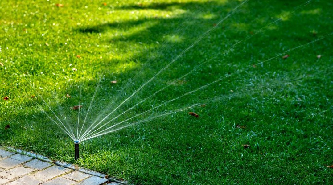 watering to establish your new lawn