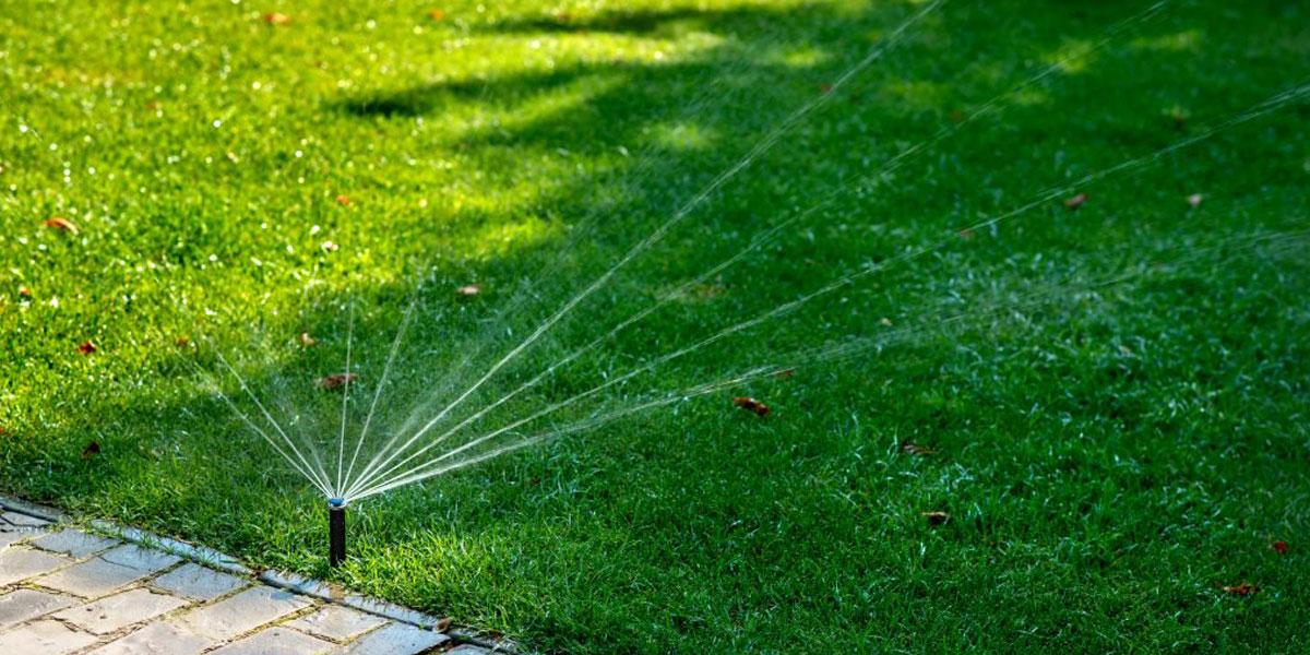 Watering for Establishment