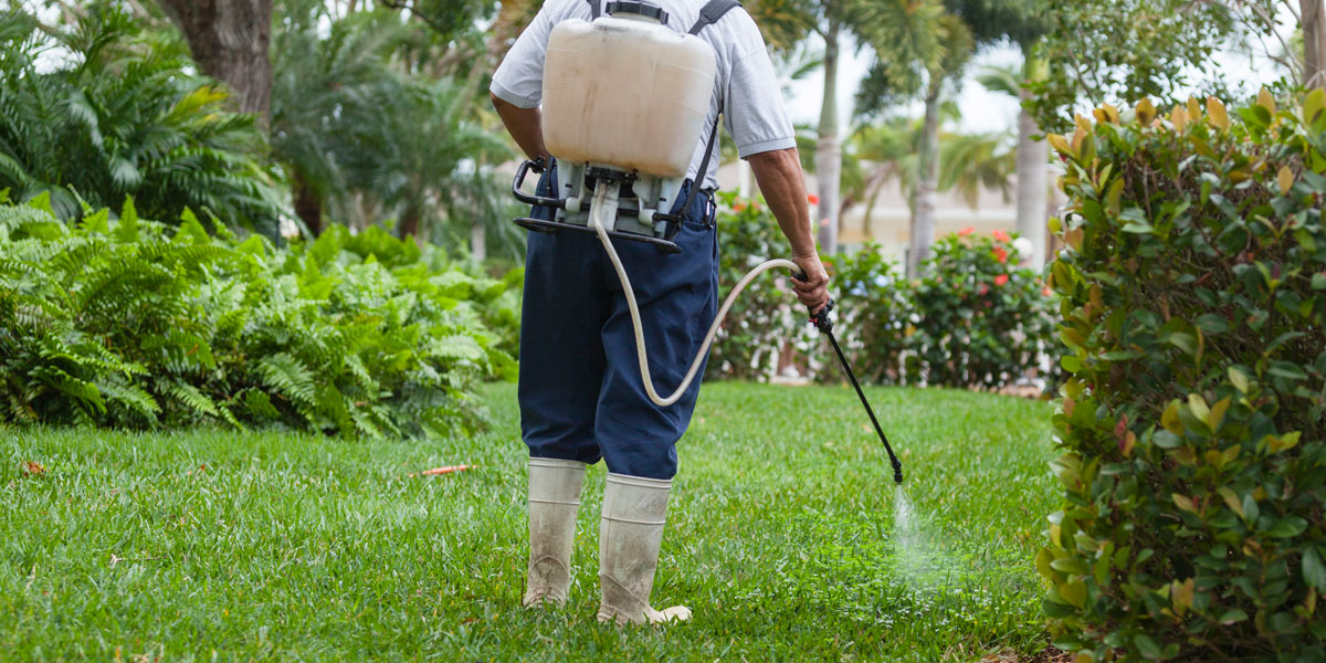 controlling weeds in your lawn