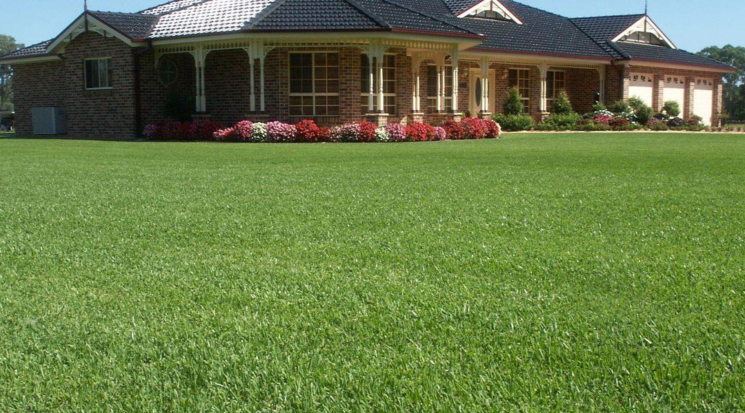 shade plus lawn